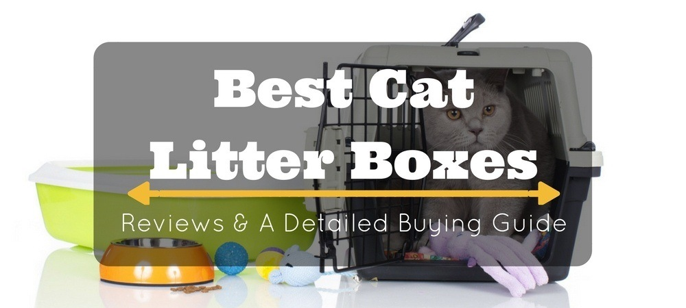 best-cat-litter-boxes