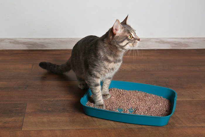 How Often Should A Cat Poop