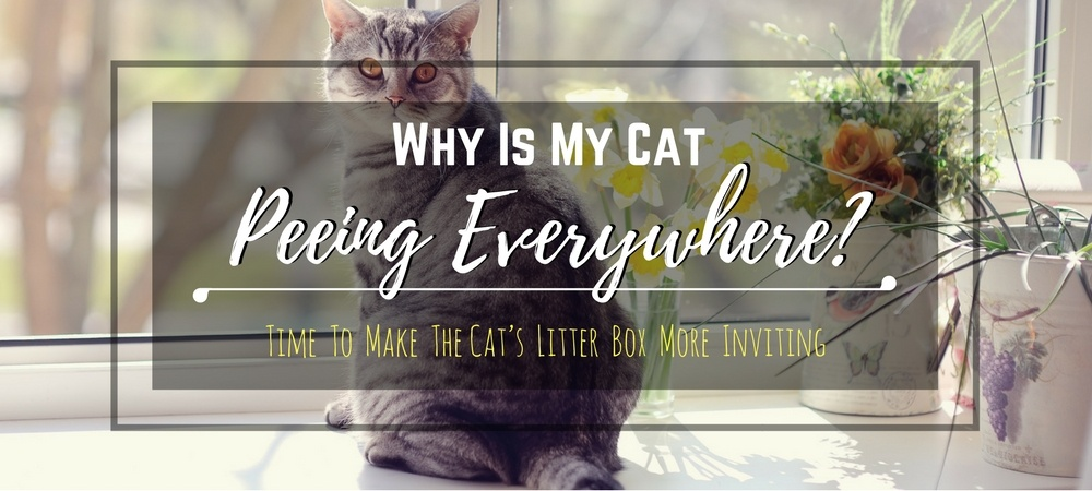 cat-peeing-everywhere