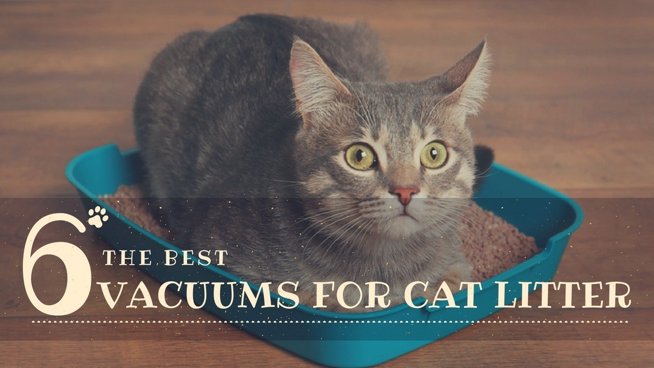 best-vacuums-for-cat-litter