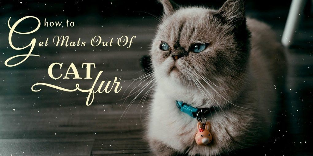How To Get Mats Out Of Cat Fur Is It Dangerous For Your