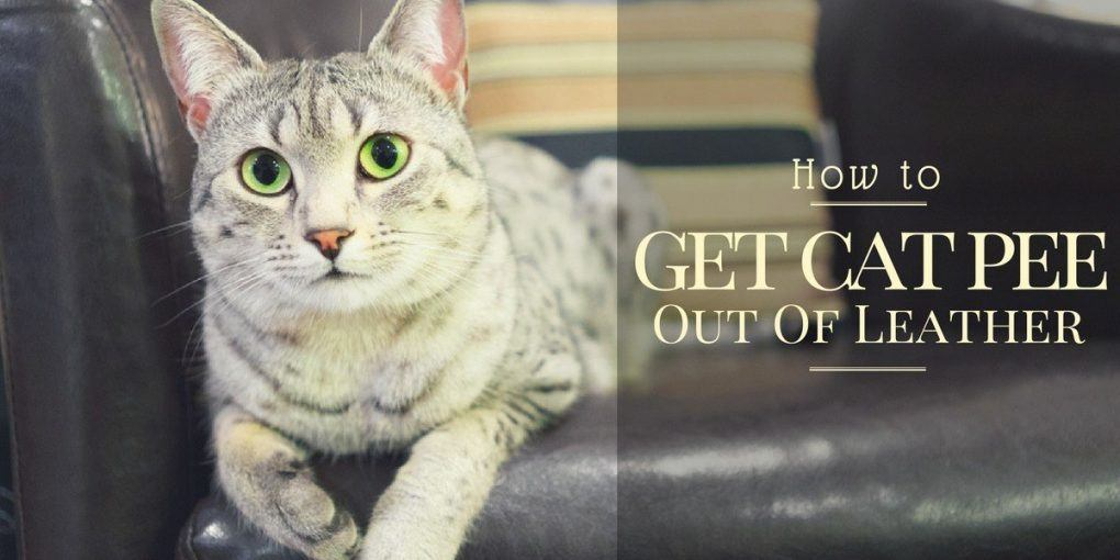 how-to-get-cat-pee-out-of-leather