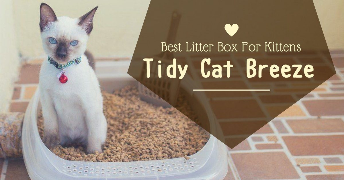 tidy-cat-breeze-reviews