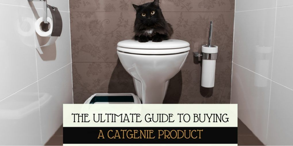 Catgenie reviews