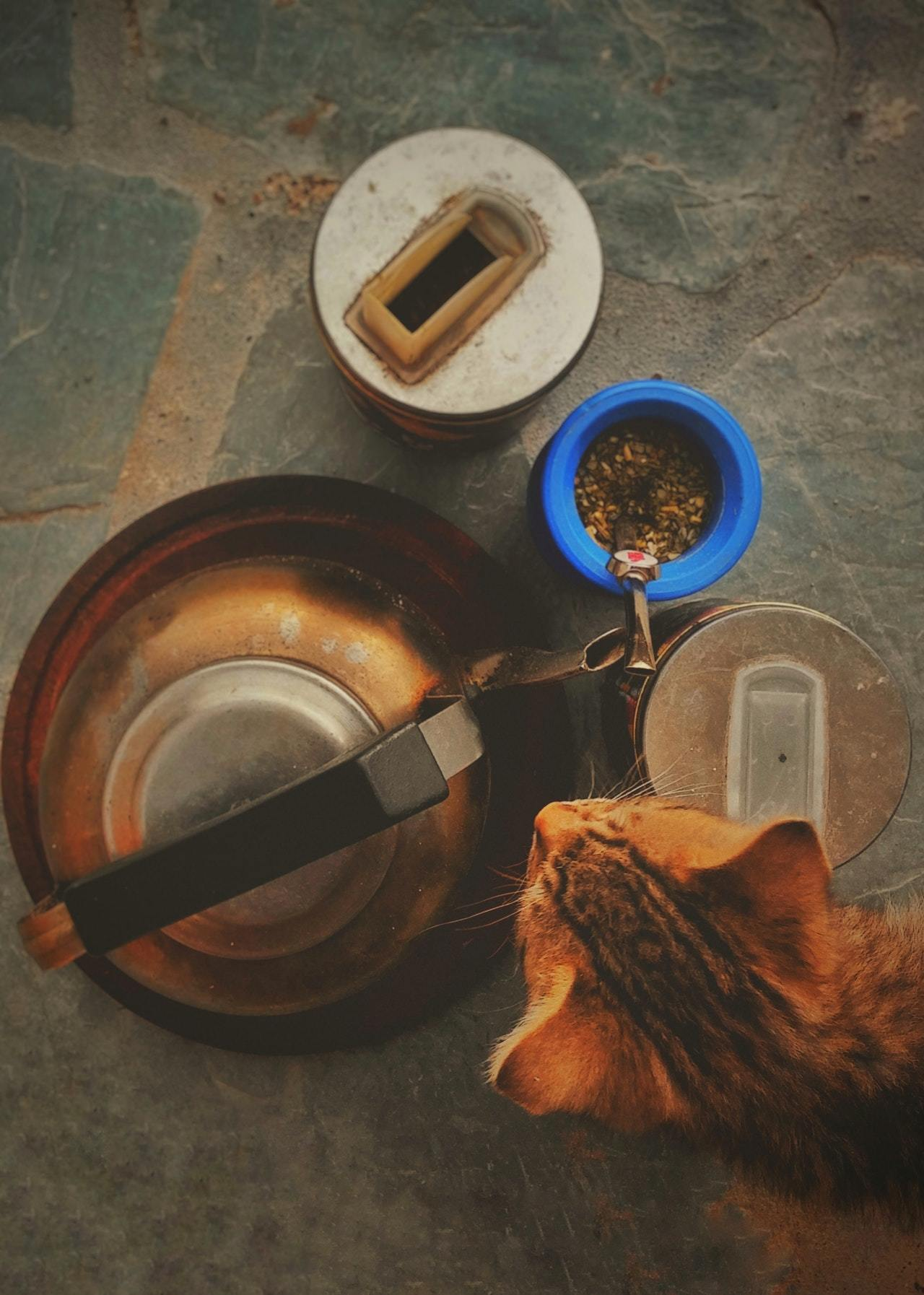 best cat food for sensitive stomach