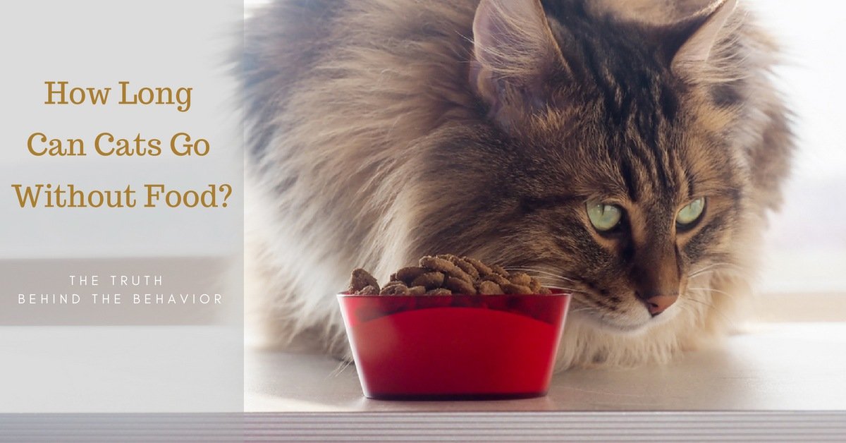 How Long Can Cats Go Without Food
