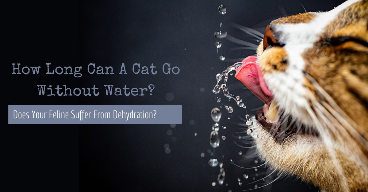 how long can a cat go without water