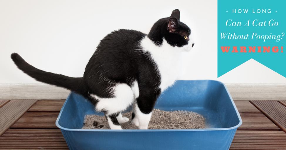 valium for cats urinating