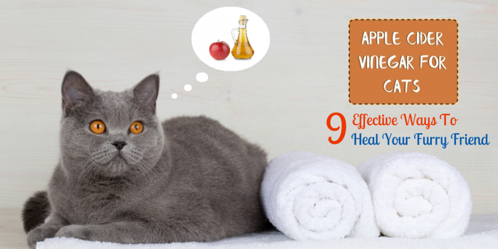 apple cider vinegar for cats