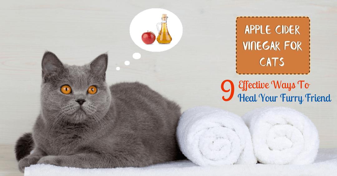 apple cider vinegar for cats