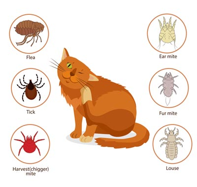 cat itchy skin home remedy