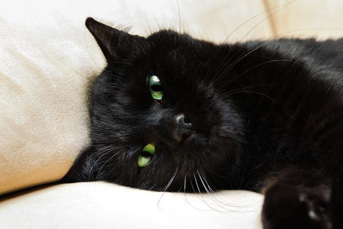 Names For Black Cats With Green Eyes