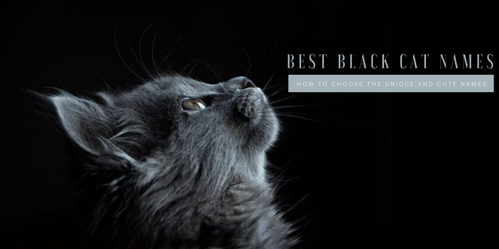 best black cat names