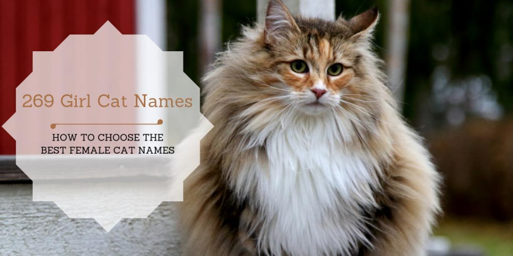 269 Girl Cat Names Of 2019 How To Choose The Best Female Cat Names
