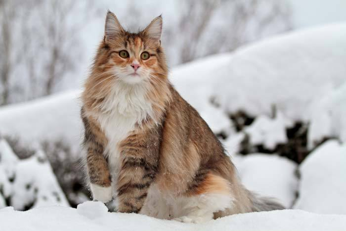 cool female cat names