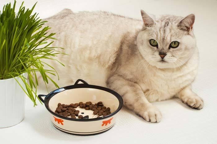 Cat Appetite