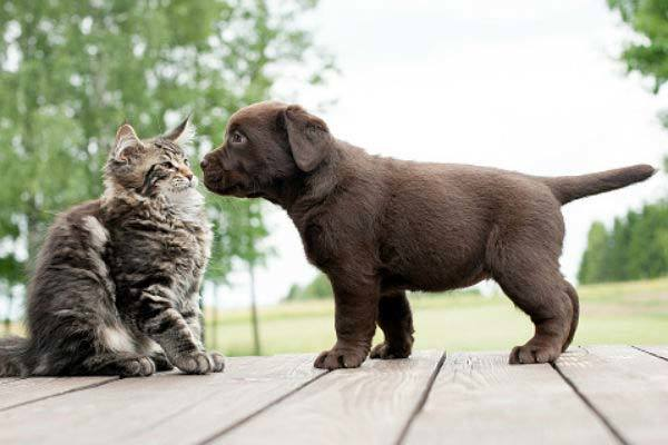 how to stop a dog from eating cat poop