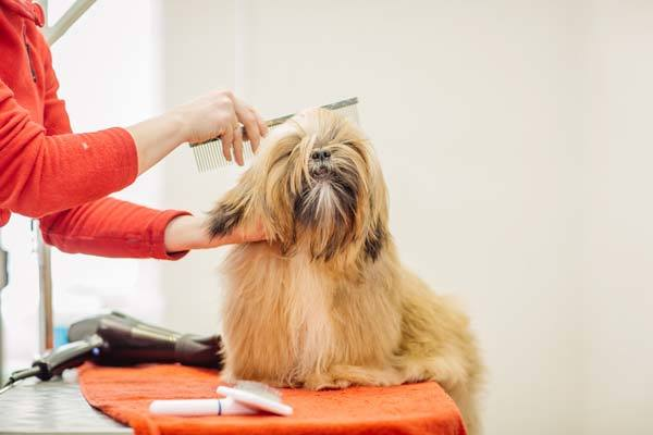 how to get rid of pet hair