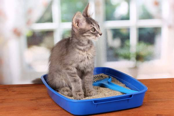 Choosing The Best Litter For Declawed Cats