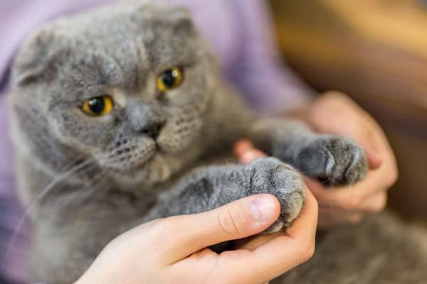 What Are The Common Problems In Declawed Cats