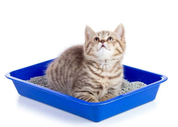 How To Keep The Litter Box Clean For Long Durations