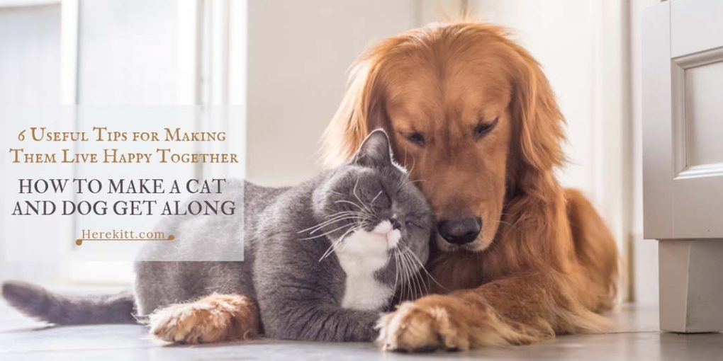 how to make a cat and dog get along