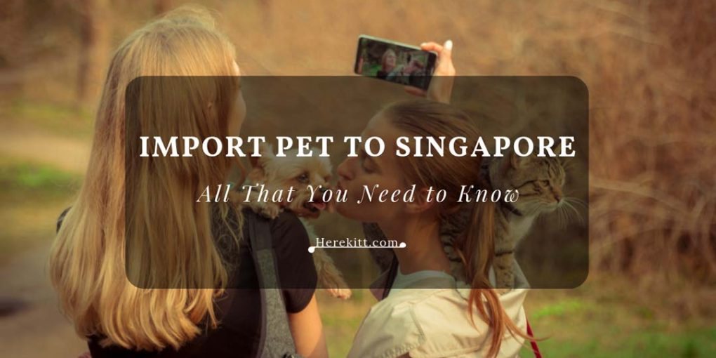 import pet to singapore