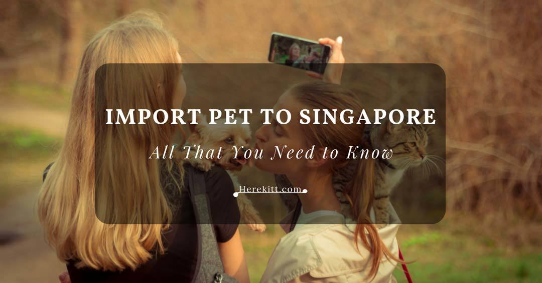 import pet to singapore