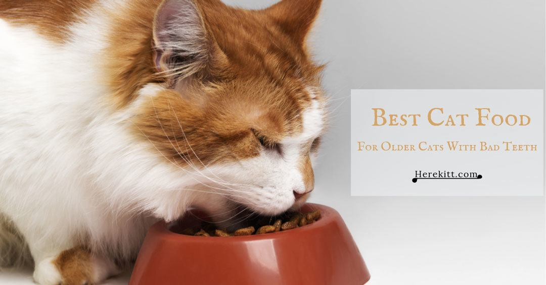 best cat food for older cats with bad teeth