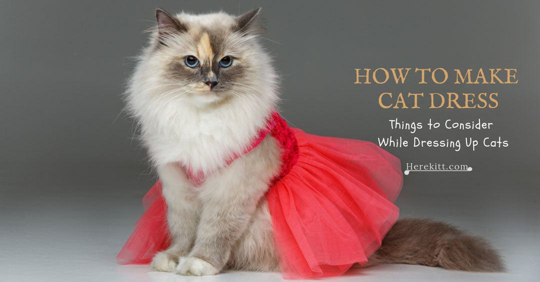how to make cat dress