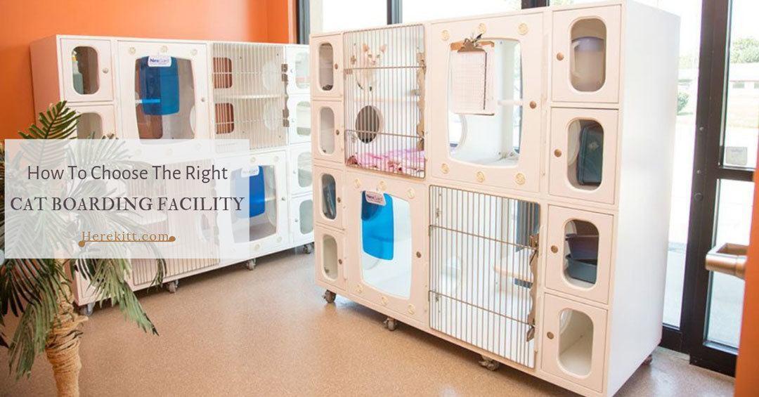 cat boarding facility