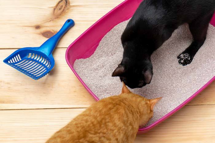 how to stop cat litter tracking
