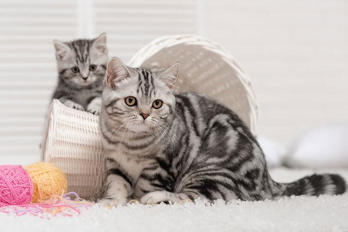 male and female cats living together