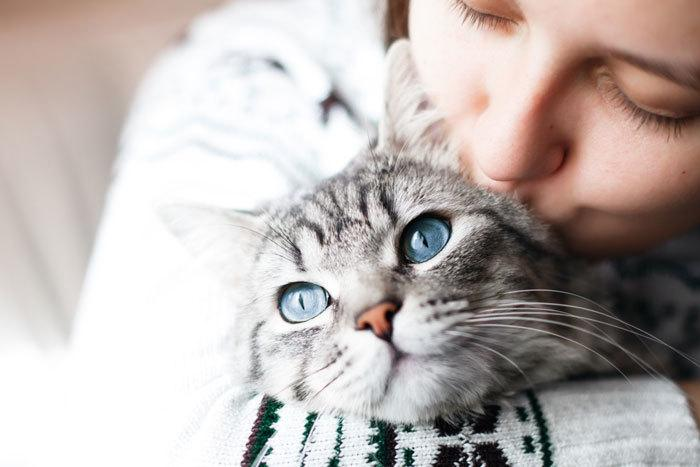 care tips for new cat owners