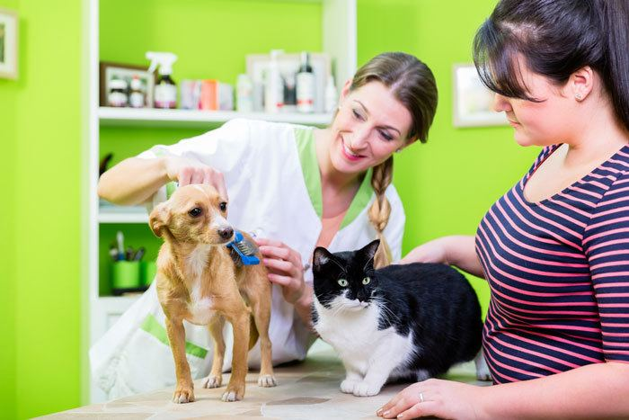health tips to make your pet happy