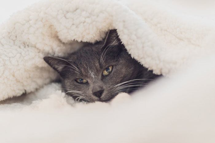 why cats love heated sleeping spots and beds