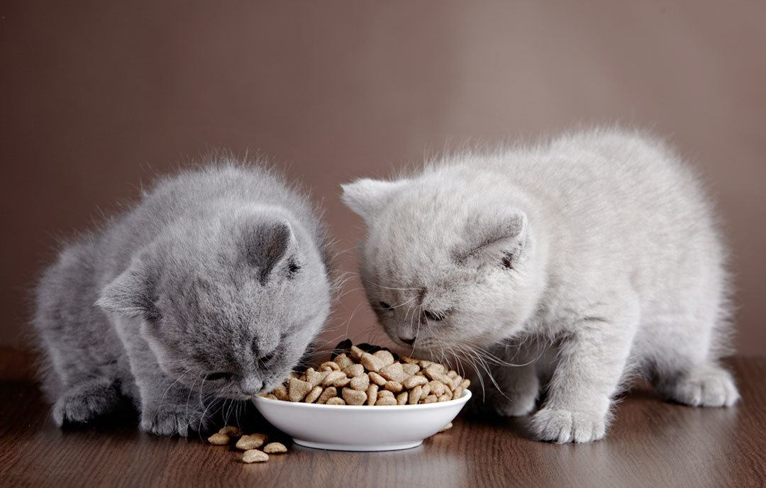 when to switch from kitten food to cat food