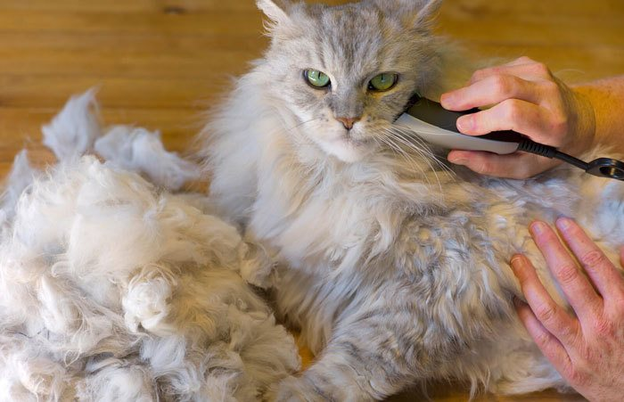 matted cat hair