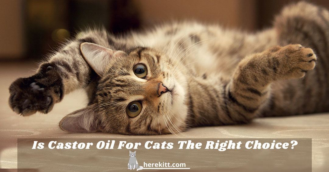 castor oil and cats
