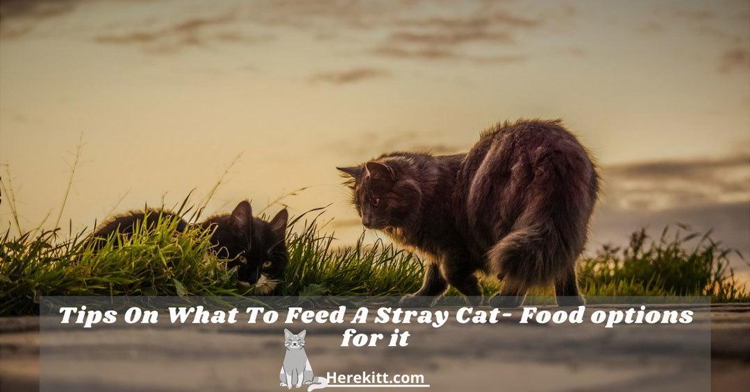 what to feed a stray cat