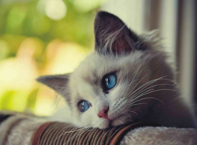 why do cats sigh