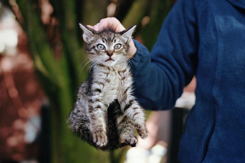 scruffing a cat