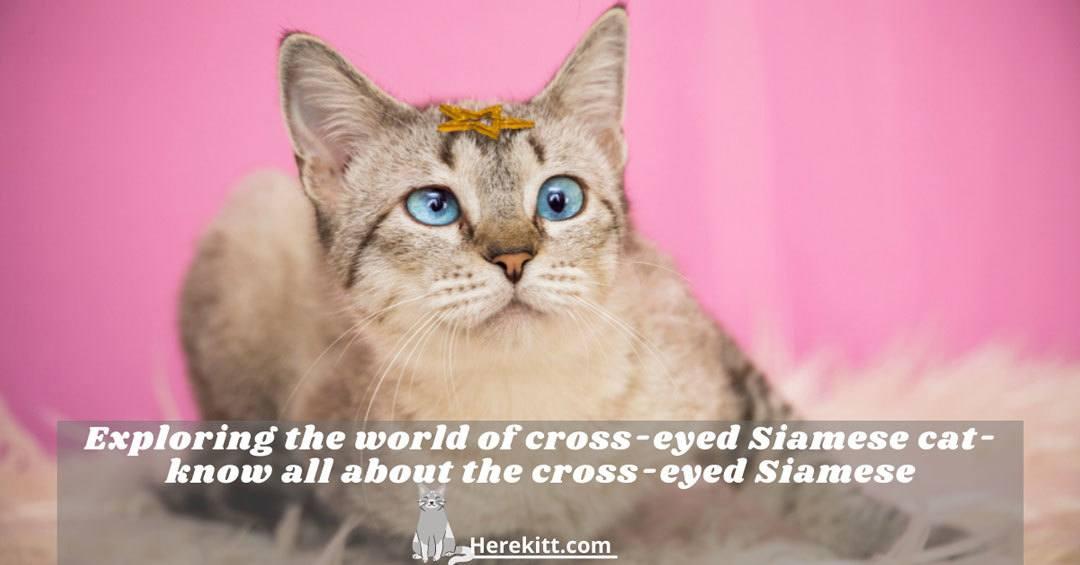 cross-eyed Siamese cat