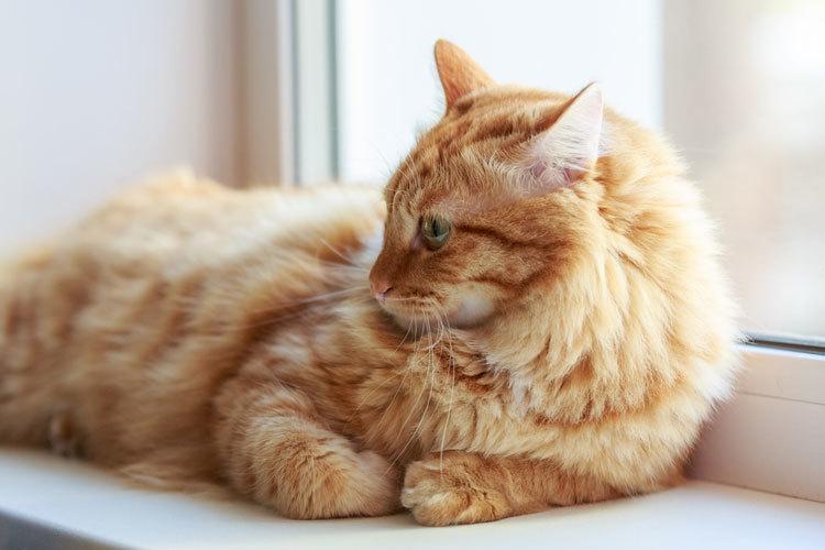 tabby cats vs tiger cats