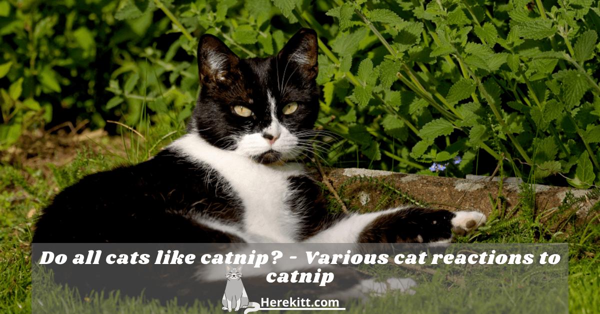 do all cats like catnip