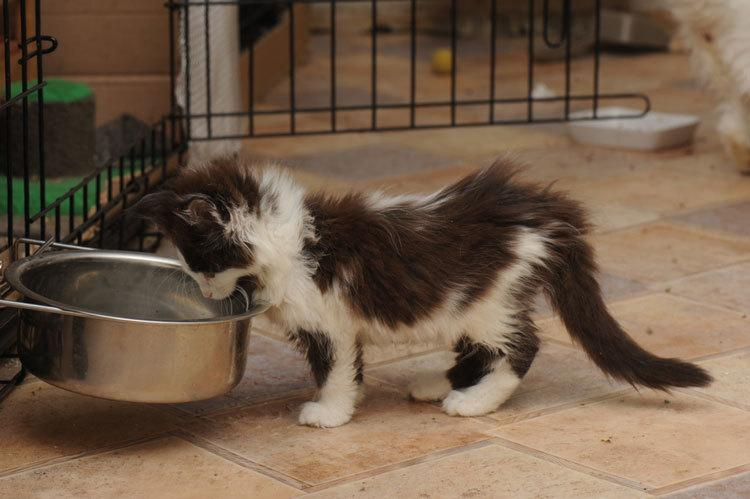 no spill cat water bowl
