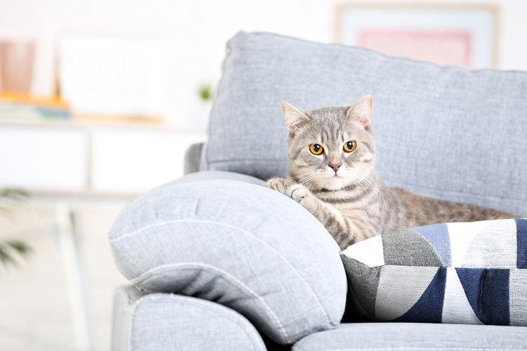 best couch material for cats
