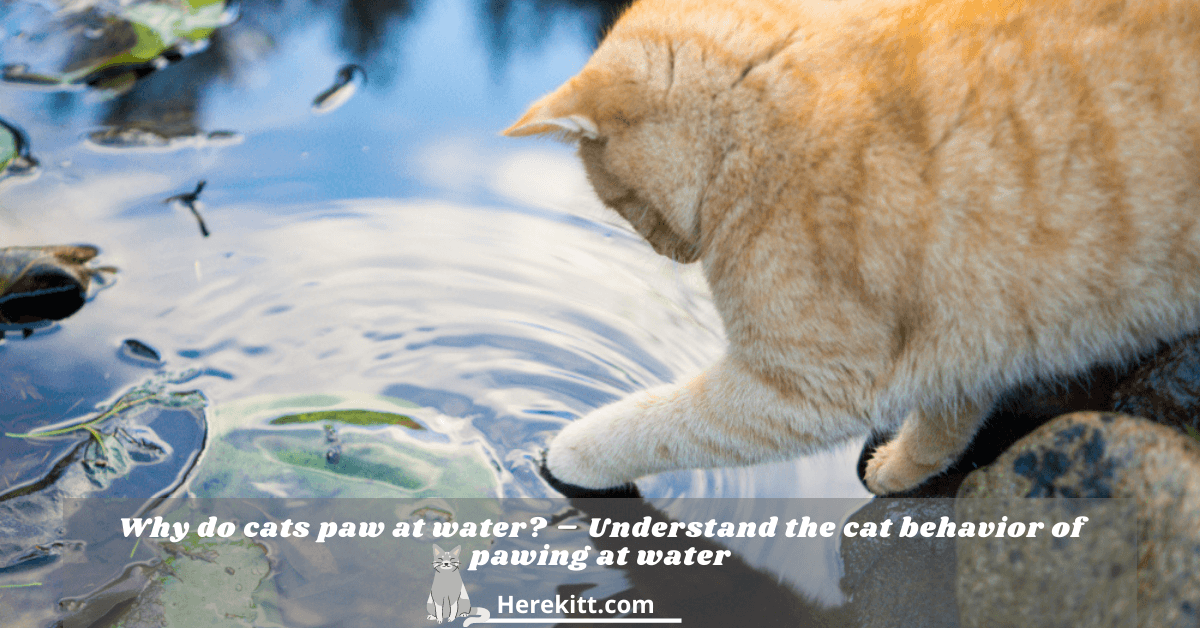 why do cats paw at water