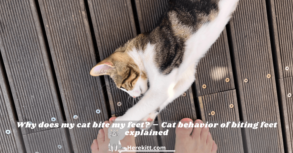 why does my cat bite my feet