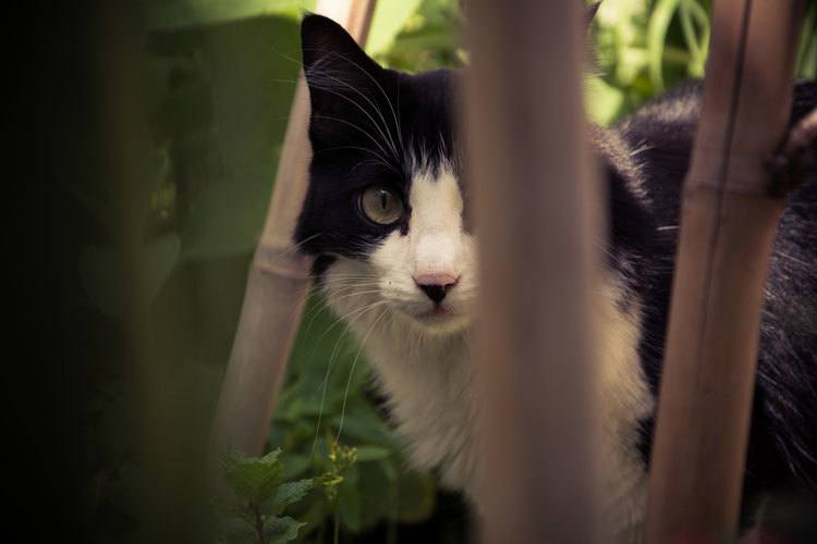 is bamboo toxic to cats